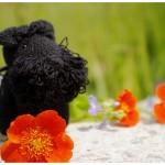 amigurumi, dog, keychain, Giant Schnauzer, šuo, pakabukas, ryzenšnauceris